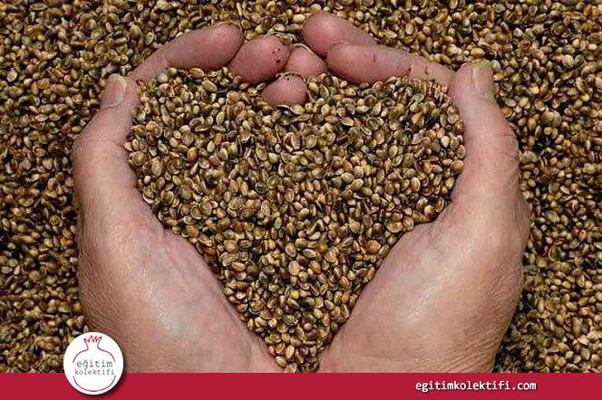 toprağa istediğin zaman tohum atamazsın. toprağın nemlenmesi, belli bir sıcaklığa ulaşması gerekli. bunlara dikkat etmezsen ektiğin tohum çıkmaz.