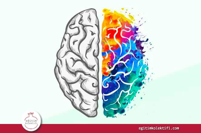 Nöromit Nedir? Hepimizin Doğru Sandığı 12 Nöroloji Miti!
