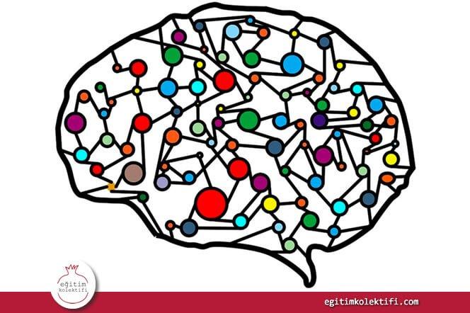 Beynin işlevleri üzerine son yıllarda 'empoze edilen' bilginin gerçekleri tam olarak ifade etmediğini söylesek şaşırır mısınız?
